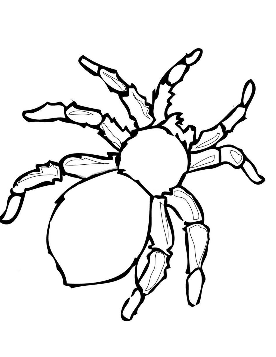 Arañas Para Colorear 𝐃𝐢𝐛𝐮𝐣𝐨𝐬 𝐩𝐚𝐫𝐚 𝐢𝐦𝐩𝐫𝐢𝐦𝐢𝐫 𝐲