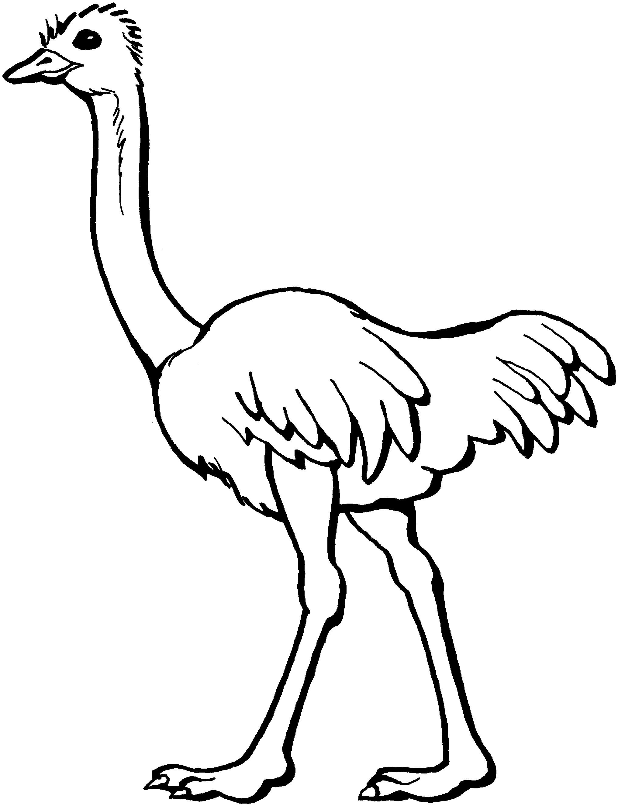 avestruz para colorear 🥇 𝐃𝐢𝐛𝐮𝐣𝐨𝐬 𝐩𝐚𝐫𝐚 𝐢𝐦𝐩𝐫𝐢𝐦𝐢𝐫