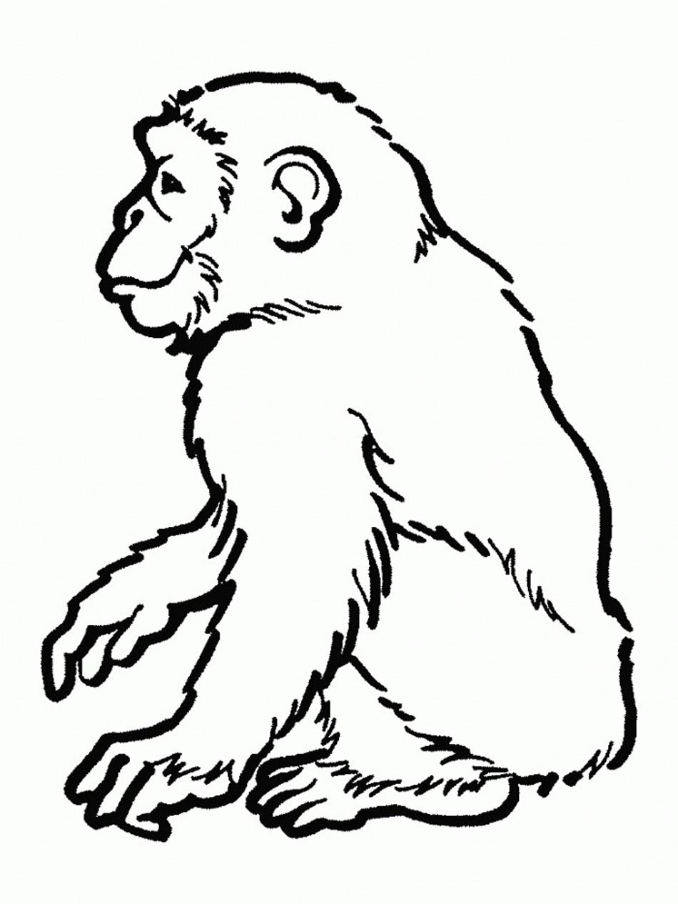 chimpance para colorear ❺❺ 【DIBUJOS para descargar y Pintar】