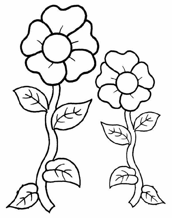 Flores Para Colorear Dibujos Para Imprimir Y Pintar